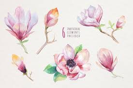 Watercolor Magnolia By Peace Art On At Creativemarket Love