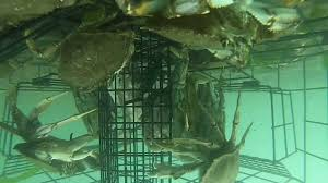 King Crab Pot Design Gopro Underwater Crab Trap Crab Net