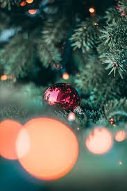 900 Christmas Tree Images Download Hd Pictures Photos On