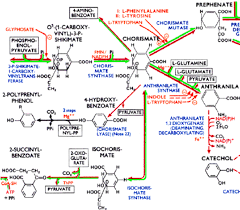 A Small Part Of The Boehringer Biochemical Pathways Poster