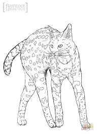 Small Picture Serval coloring page Free Printable Coloring Pages