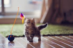 The 9 Best <b>Cat Toys</b> of 2019 - The Spruce <b>Pets</b>