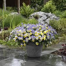 10 container gardening ideas best