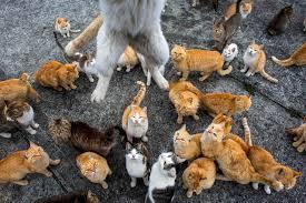 lots of cats tumblr. Beautiful Tumblr Island On Lots Of Cats Tumblr K
