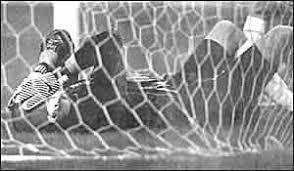<b>Футбольный</b> матч <b>Россия</b> — Украина (1999) — Википедия