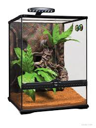 crested gecko expedition