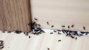 Ameisen Bekämpfen Tipps Hausmittel Gegen Ameisen Im Haus