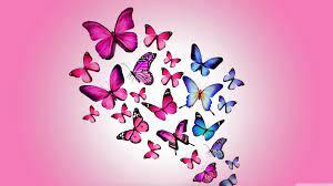 Wallpaper HD Butterfly on WallpaperSafari