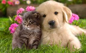 cute kittens and puppies quotes. Brilliant Kittens 0723128 Throughout Cute Kittens And Puppies Quotes U