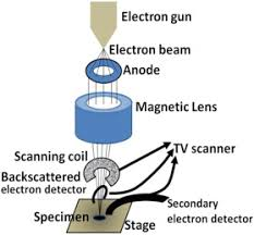 Scanning Electron Microscopy An Overview Sciencedirect