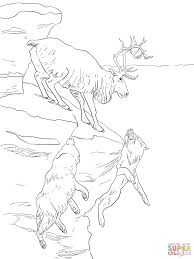 Small Picture Peary Caribou coloring page Free Printable Coloring Pages
