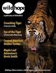 tiger book carol kaufm cheetah conservation fund essay on cats in urdu