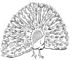 Small Picture PeacockAnimalColoringPages Free Printable Peacock Coloring