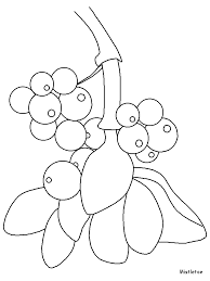Small Picture Mistletoe Flowers Coloring Pages Coloring Book