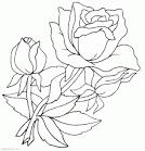 Картинки цветов раскраски