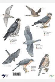 Birds Of Prey Field Studies Council