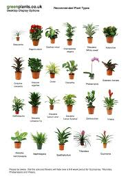 plants for windowless office. plants for windowless office 20 best low or artificial light images on pinterest t