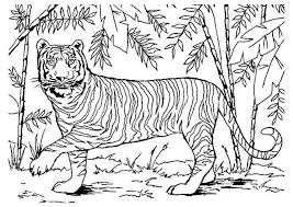 Kleurplaat Zuid Afrika Tiger Ausmalbilder Fr Erwachsene Kostenlos