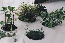 thyme to plant an indoor herb garden