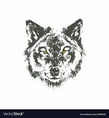 Drawn Wolf Hand Drawn Wolf Sketch On White Background Vector Image