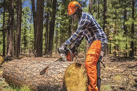 best chainsaw. best chainsaw brands