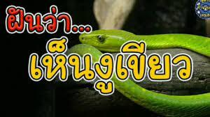 ทำนายฝัน ฝันเห็นงูเขียว ฝันว่า งูเขียว | ทำนายฝัน เลขเด็ด | ฝัน ว่า งู  เขียว กัด มือ - ข่าวอุตสาหกรรมเครื่องหนัง