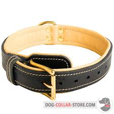 nappa padded leather dog collar with reliable brass buckle