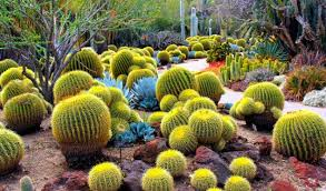 Small Picture 12 Cactus Garden Ideas For You Top Inspirations