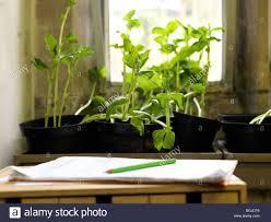 classroom window. Plants Growing In Classroom Window