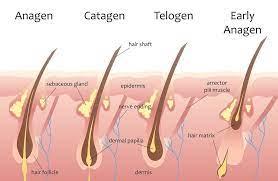 does shaving make hair grow faster big