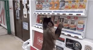 Vending Machine Gif Extraordinary How To Work A Vending Machine As Told By A Monkey