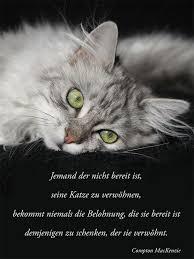 Wie Wir Belohnt Werden Cat Katzen Zitate über Katzen Und