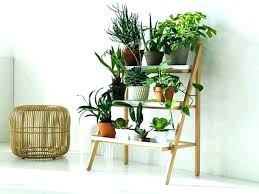 indoor plant table tall