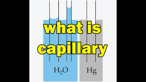 What Is Capillary Action Capillary Rise And Fall In Hindi Explain Capillary Action In Hindi