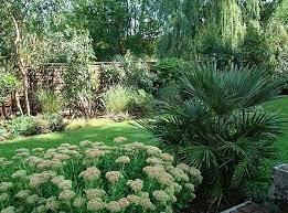 mediterranean garden plants uk 10 best