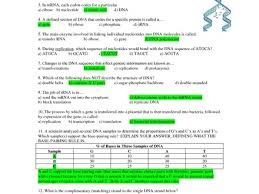color cc org dna rna and protein synthesis essay