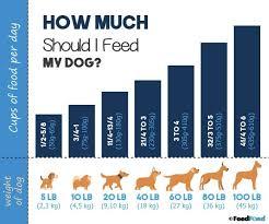 How Much Should I Feed My Dog Puppy To Senior Feeding