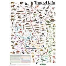 Charles Darwins Tree Of Life Evolution Chart 24x36