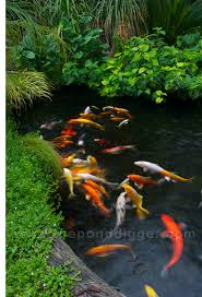 Small Picture Koi Pond Design The Pond Digger