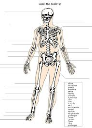 label the skeleton system | School - Human Anatomy | Pinterest ...