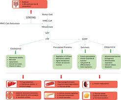 Statin Toxicity Circulation Research