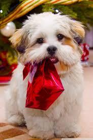 christmas puppy iphone wallpaper. Exellent Iphone Mobile HVGA 32 Throughout Christmas Puppy Iphone Wallpaper U