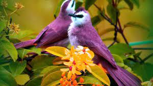 Beautiful Bird and Flower Wallpapers ...