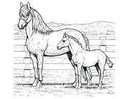 Horse Coloring Pages For Adults Or Free Coloring Pages Horses