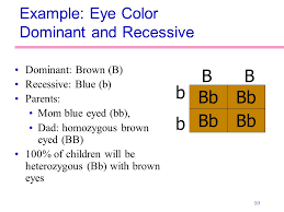 Eye Color Recessive Dominant Chart Principles Of Heredity Ppt Video Online Download