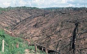 amazon rainforest deforestation. Fine Rainforest Deforestation Of The Amazon Rainforest Is On Increase Inside Rainforest O