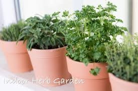 indoor herb gardens how to grow a