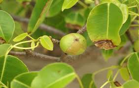 5 Fruit Citrus Tree  YouTubeMedley Fruit Tree