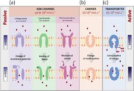 3 Types Of Passive Transport Types Of Membrane Proteins Mediating Translocation Across