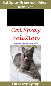 cat spray kitty cat prevention dogs best cat urine smell remover spray to remove cat urine smell cat urine smell air cat urine remover cat spray